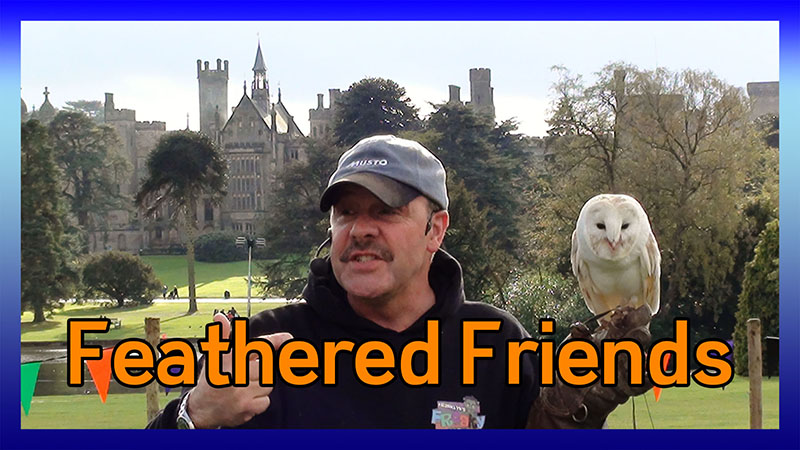 Phil's Feathered Friends Show video