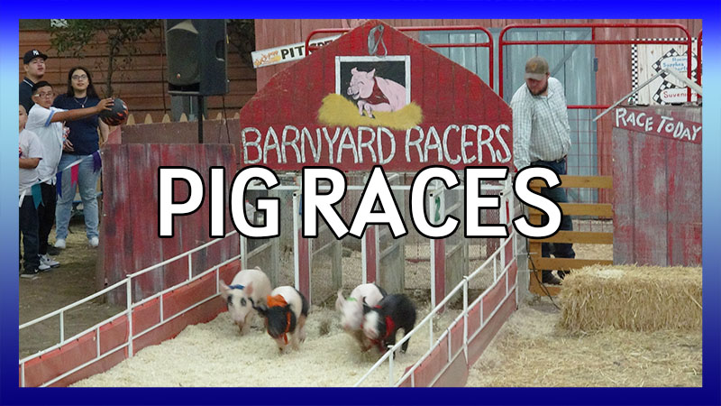 Pig Races at the LA County Fair video